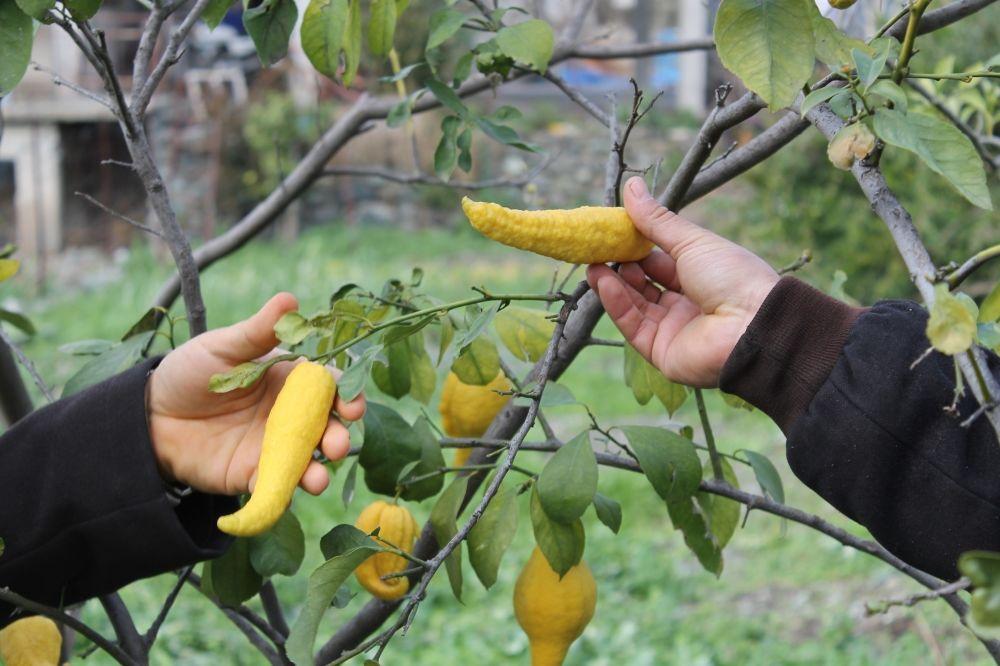 STIŽE NAM IZ TURSKE: Pogodite šta je ovo, liči na papriku, a raste na drvetu...