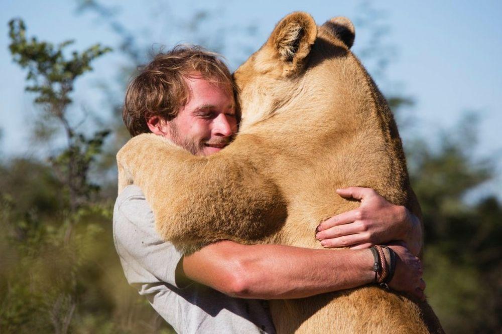 (VIDEO, FOTO) NE ZABORAVLJA: Lav zagrlio čoveka koji mu je spasao život