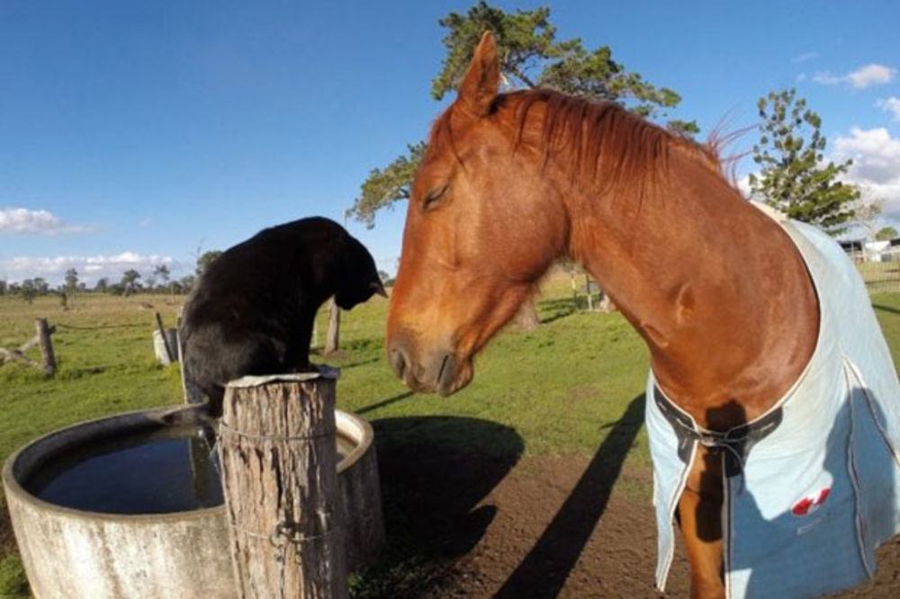 Jeste li ikada čuli za prijateljstvo između konja i mačka?