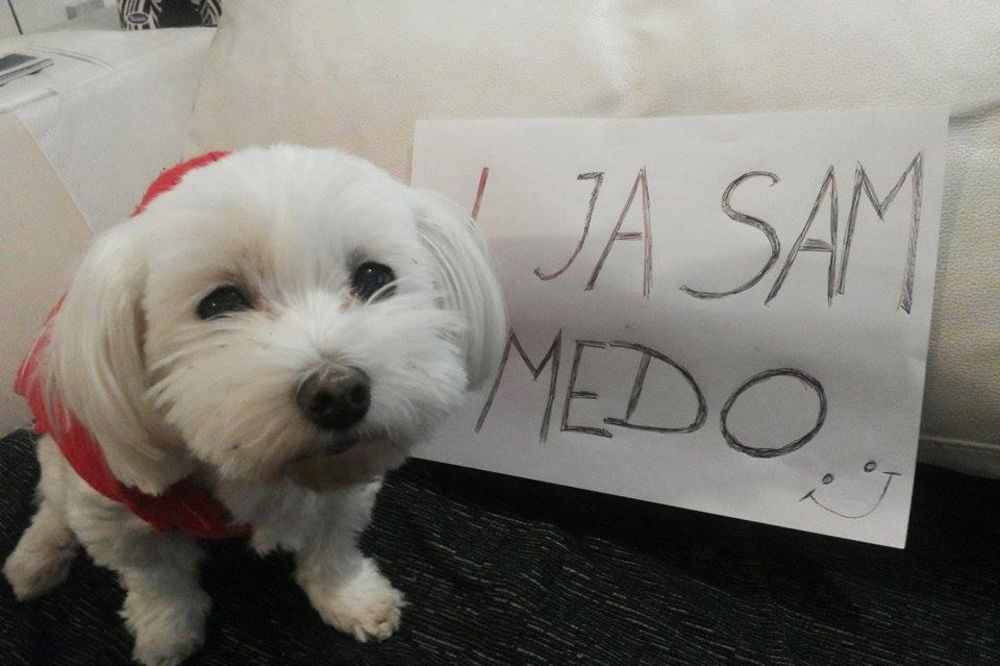 CELA BIVŠA JUGA UZ MEDU: Podrška za psa kome je zabranjeno da laje!