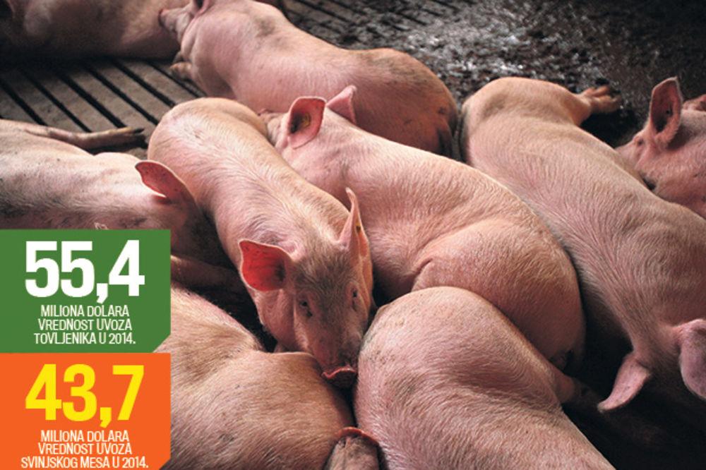 Država donosi hitne mere za spas svinjara