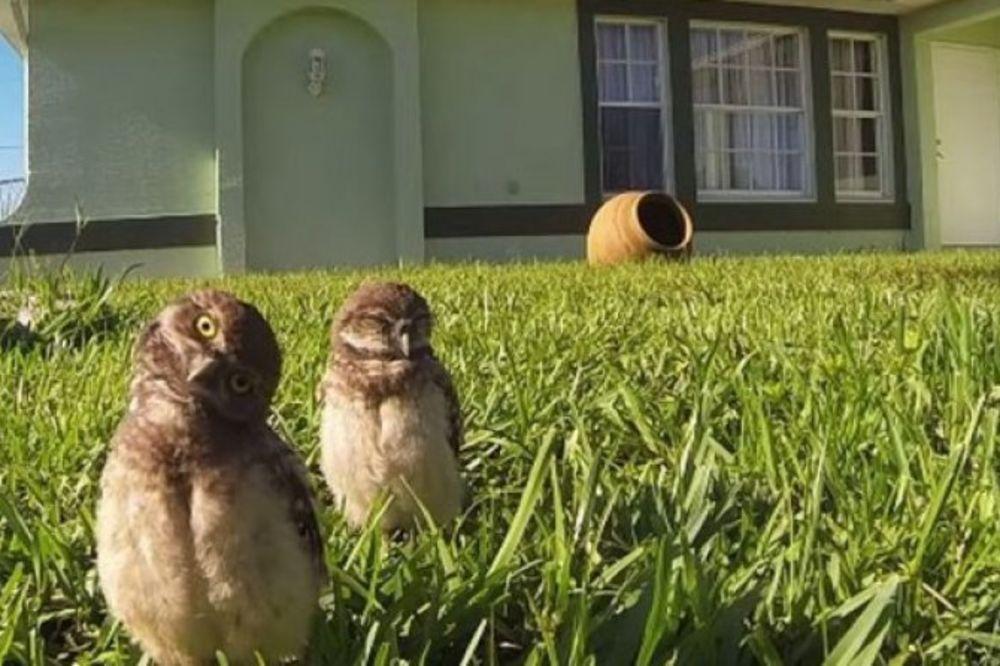 HIT NA JUTJUBU: Saznajte zašto su ove sove oduševile svet