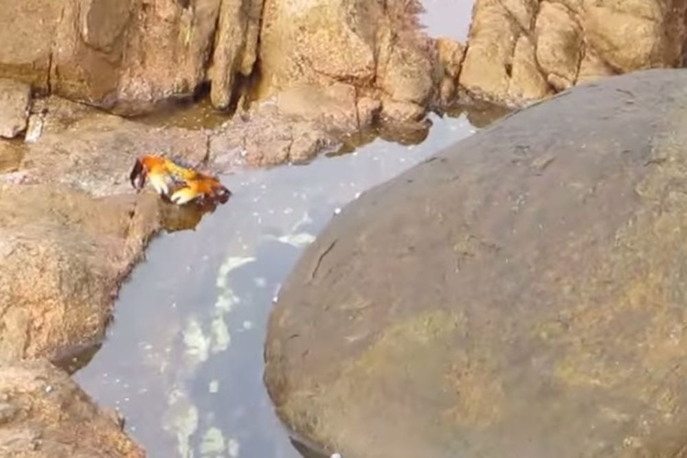 (VIDEO) Bezbrižno je šetala kamenjarom, ali ono što je iskočilo iz vode bilo je pogubno