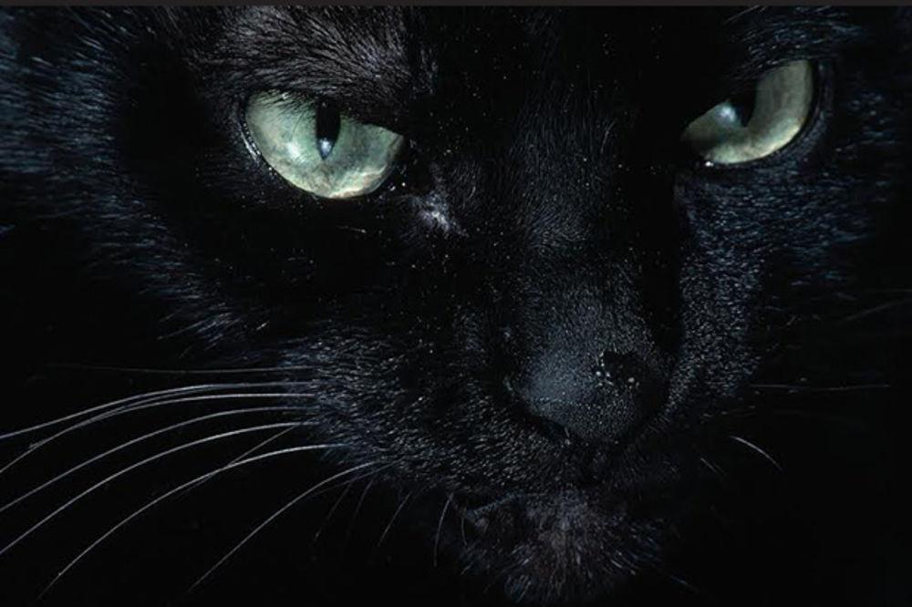 Zašto se veruje da su crne mačke baksuzne?