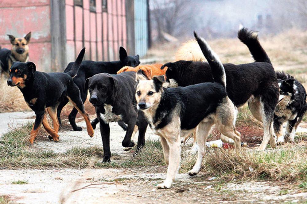 VANREDNO STANJE ZBOG DUELA SA HRVATSKOM: Sklanjaju pse zbog tenisa?!
