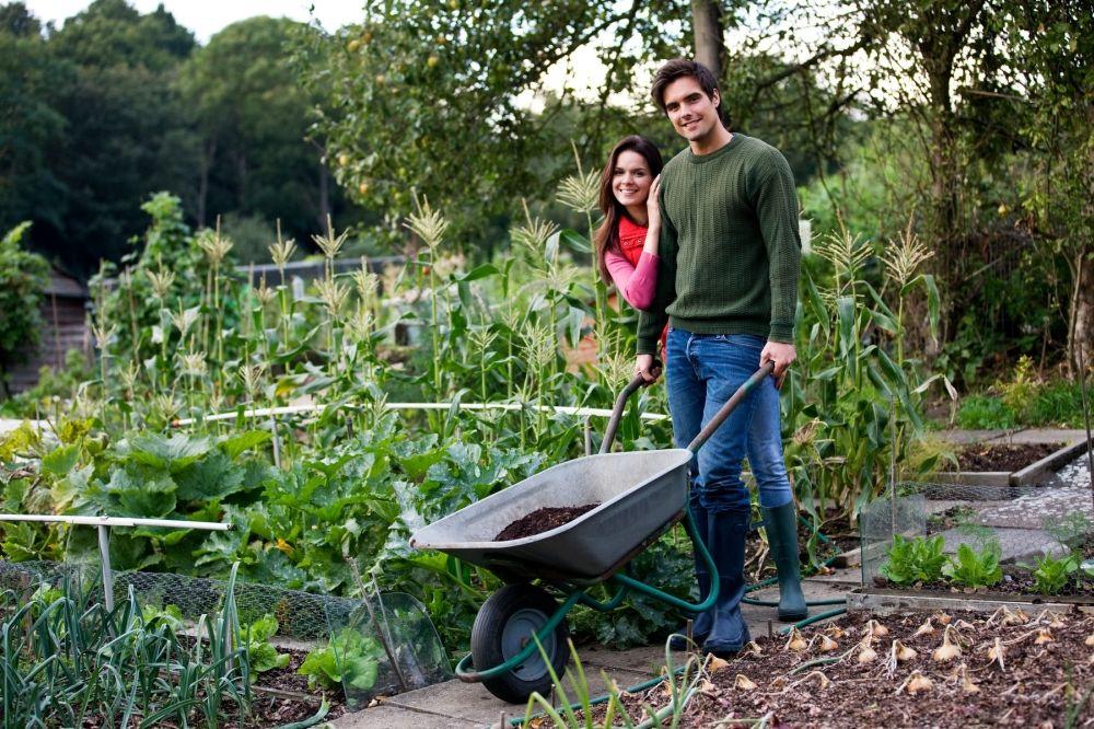 KAKO DA IZBEGNETE DUBOKO RILJANJE: Pretvorite travnjak u povrtnjak ili cvetnu...