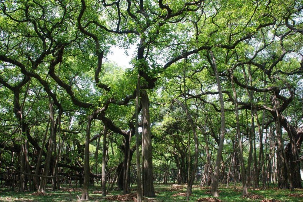 (VIDEO, FOTO) VARKA PRIRODE: Mislite da je ovo šuma? Varate se!