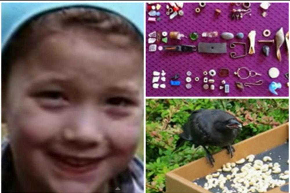 (VIDEO) Upoznajte devojčicu kojoj vrane donose poklone!