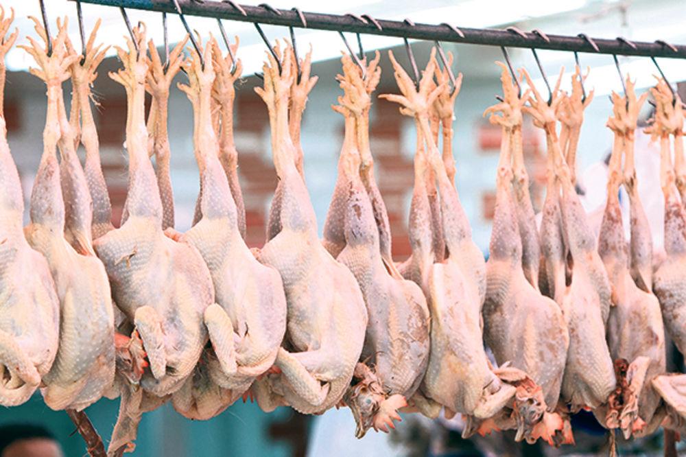 STRAŠNO: Otkrivena nelegalna klanica sa osam tona pilećeg mesa!
