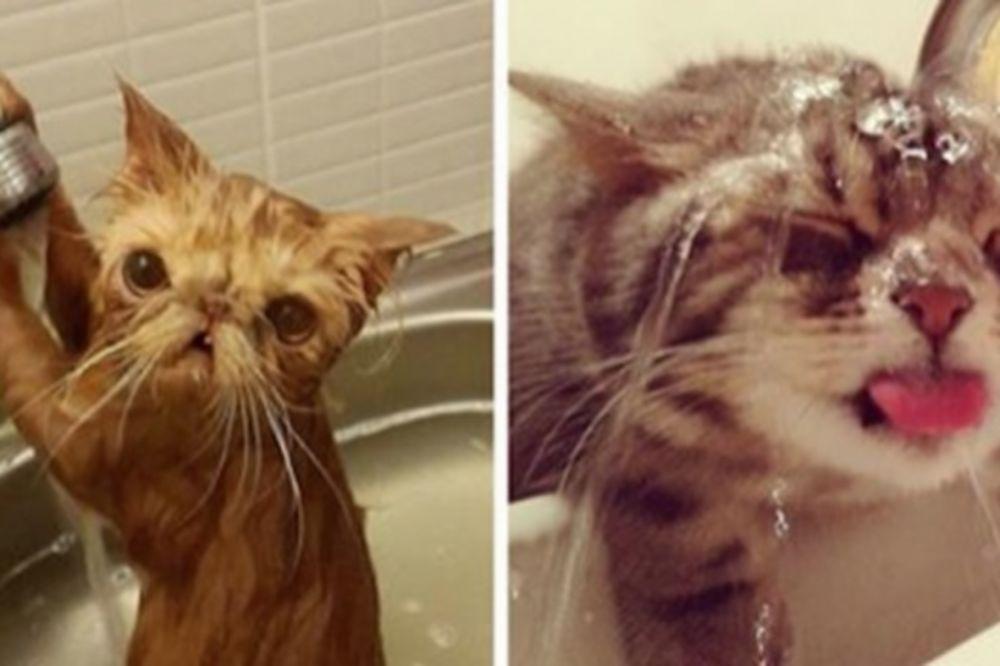 (FOTO) BUĆ BUĆ: Ko kaže da mačke ne vole vodu, ove žive za nju!