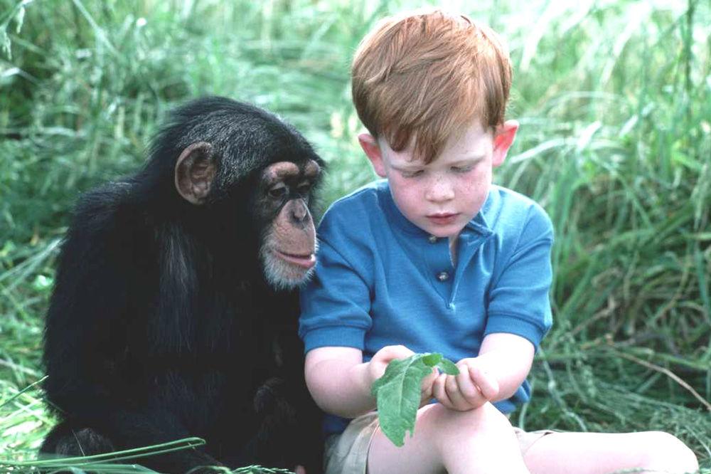 Da li je Čarls Darvin zaista tvrdio da su ljudi nastali od majmuna?