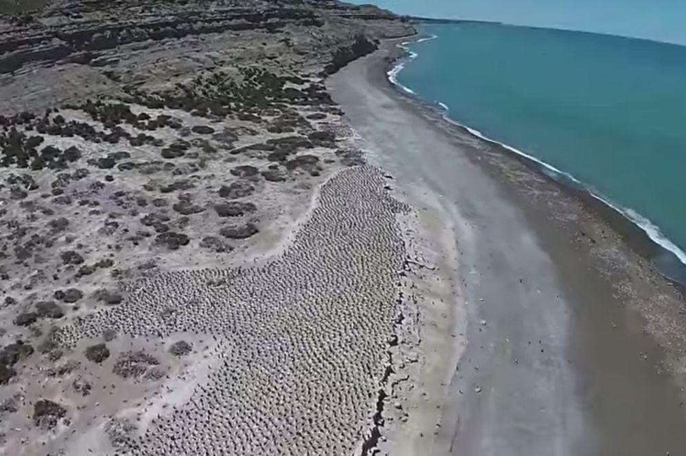 (VIDEO) Ovo je na prvi pogled sasvim obična plaža, ali kad se malo približite...