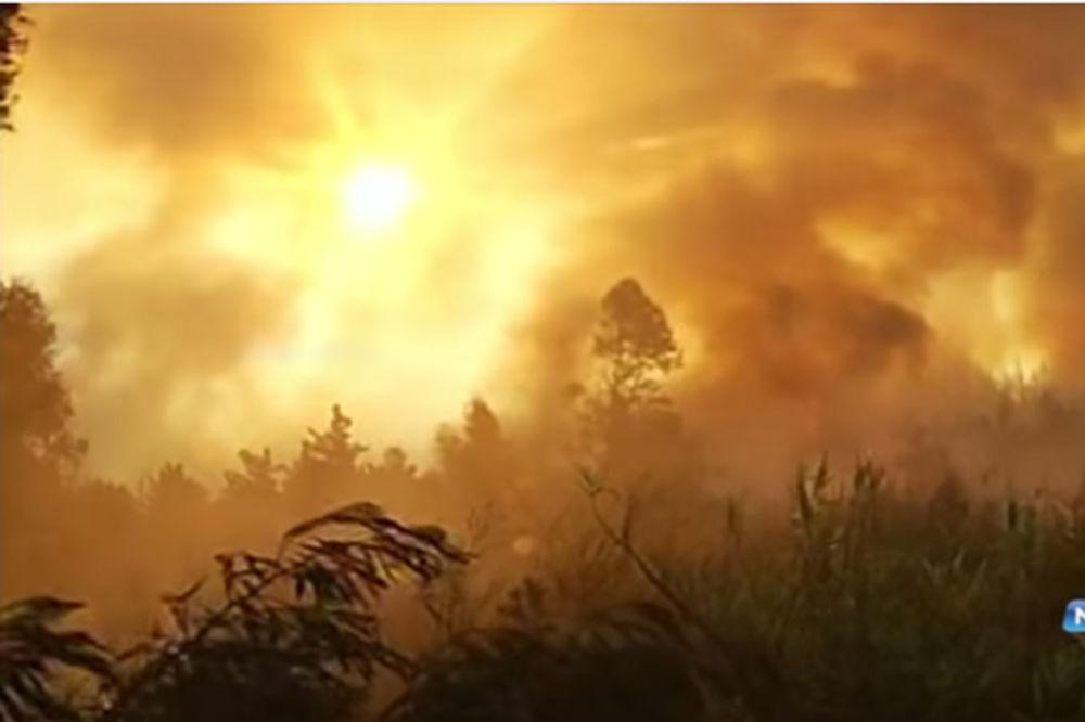 (VIDEO) ČILE POSTAO ŽIVA BUKTINJA: Vatrena stihija progutala 11.000 hektara šuma
