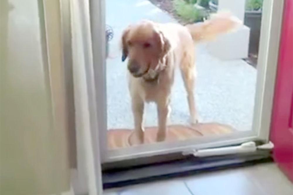 (VIDEO) POTPUNO ZBUNJENI PSI: Pogledajte zbog čega su njihovi vlasnici popadali od smeha!