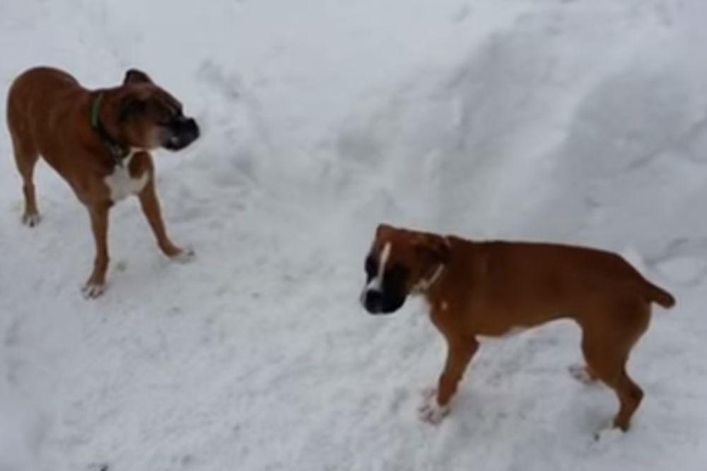 MLAD I NEISKUSAN: Kako je stariji pas nekoliku puta zeznuo štene na istu foru