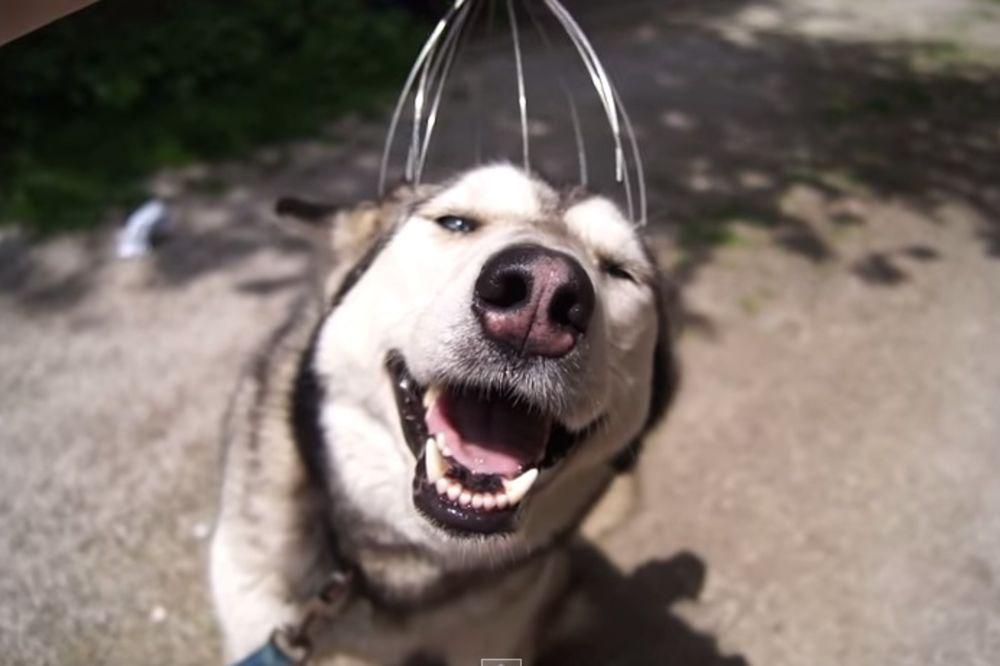 (VIDEO) TO SE ZOVE UŽIVANJE: Pogledajte kako ovaj pas uživa u češkalici za glavu