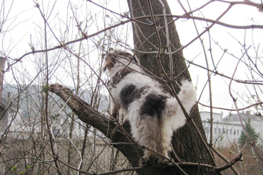 SPASAVALI GA VATROGASCI: Pogledajte kako je mačka nasamarila psa koji ju je jurio!