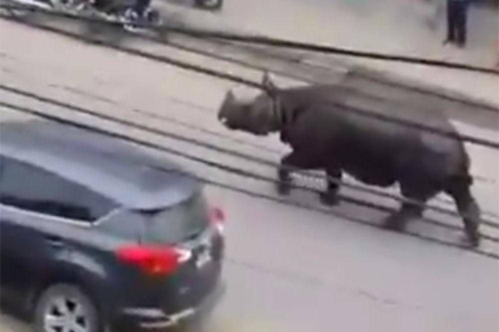 (VIDEO) ZVER DIVLJALA ULICAMA: Divlji nosorog ubio ženu usred grada u Nepalu