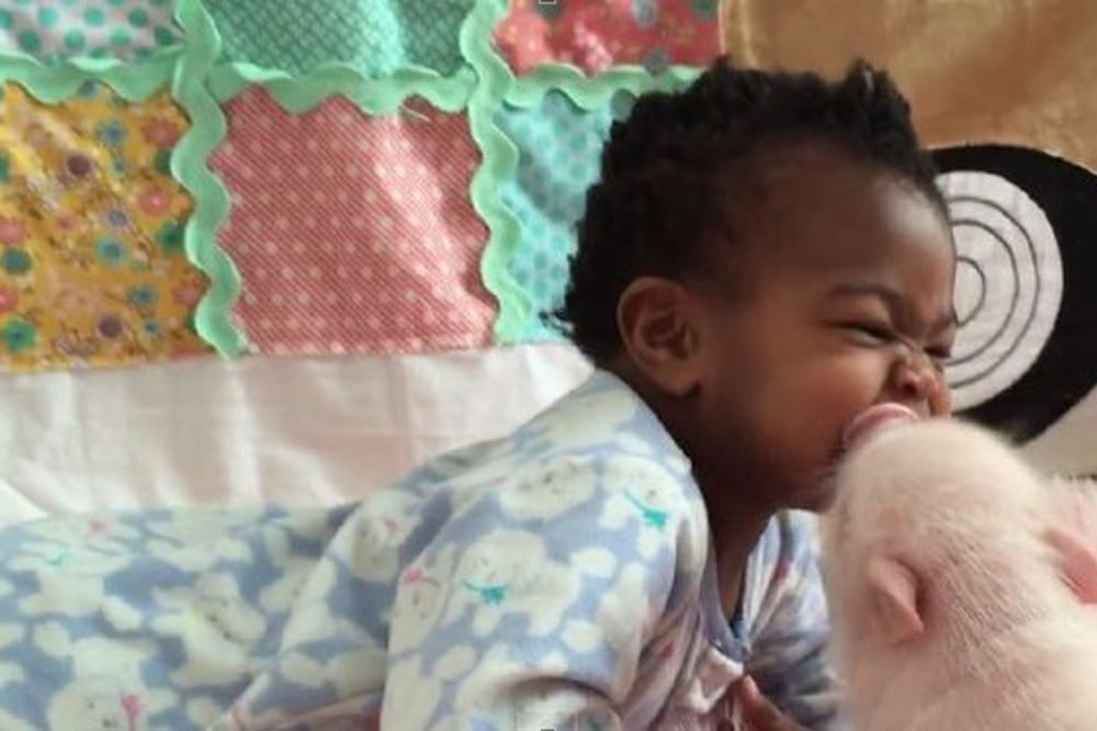 (VIDEO) BEBA I PRASE: Najslađih 17 sekundi koje ćete danas provesti u smehu