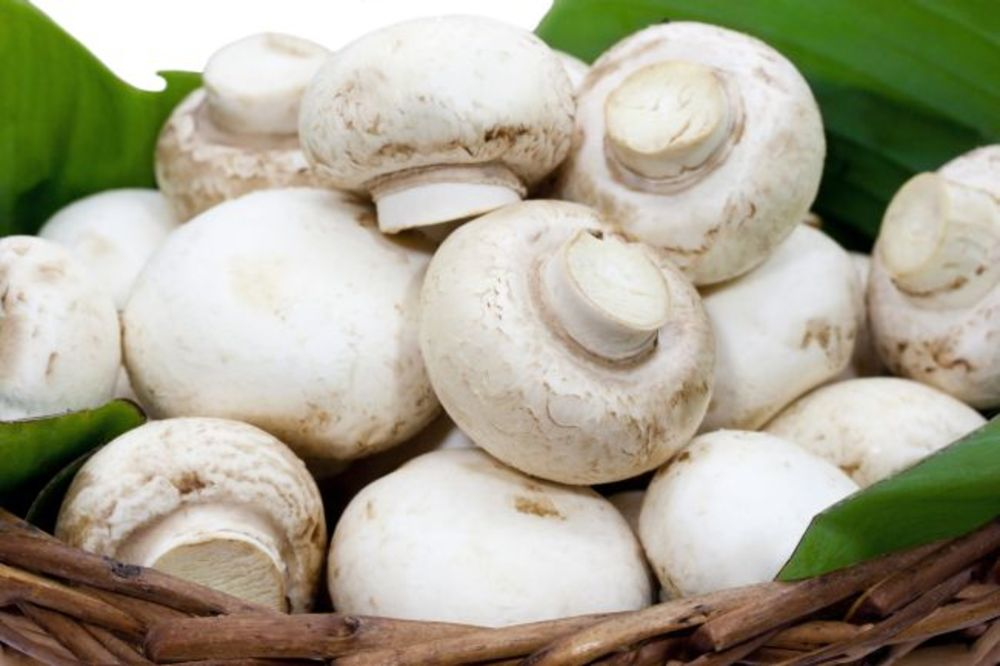 ZAKUPILI 7,5 HEKTARA: Indonežani sade pečurke u Kovinu