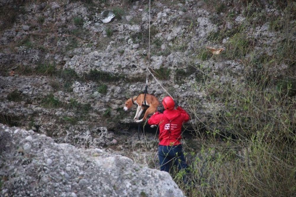 PRIČA KOJA JE RAZNEŽILA REGION: Pas danima bio zarobljen ispod mosta u Mostaru, a onda su stigli oni