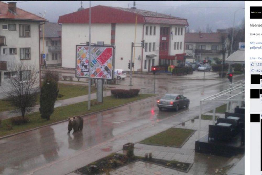 HIT NA FEJSBUKU: Medved na ulicama Pala izazvao paniku!