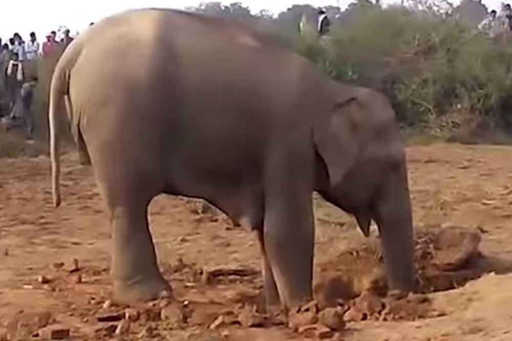 JEDNA JE MAJKA: Slonica je 11 sati pokušavala da izvuče slonče. Pogledajte kako se sve završilo
