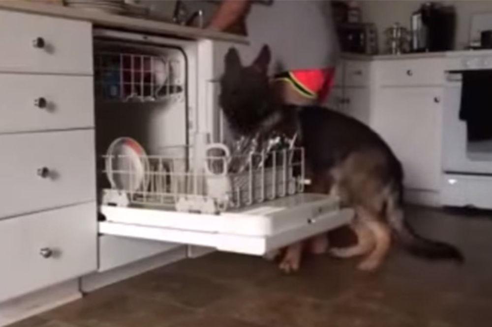 (VIDEO) TO NI MNOGI LJUDI NISU NAUČILI: Evo zašto je ovaj vučjak najbolji čovekov prijatelj!