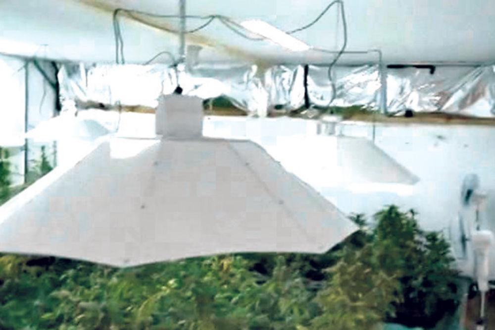 SRBI UHAPŠENI U AUSTRIJI: Krali struju za uzgoj marihuane!