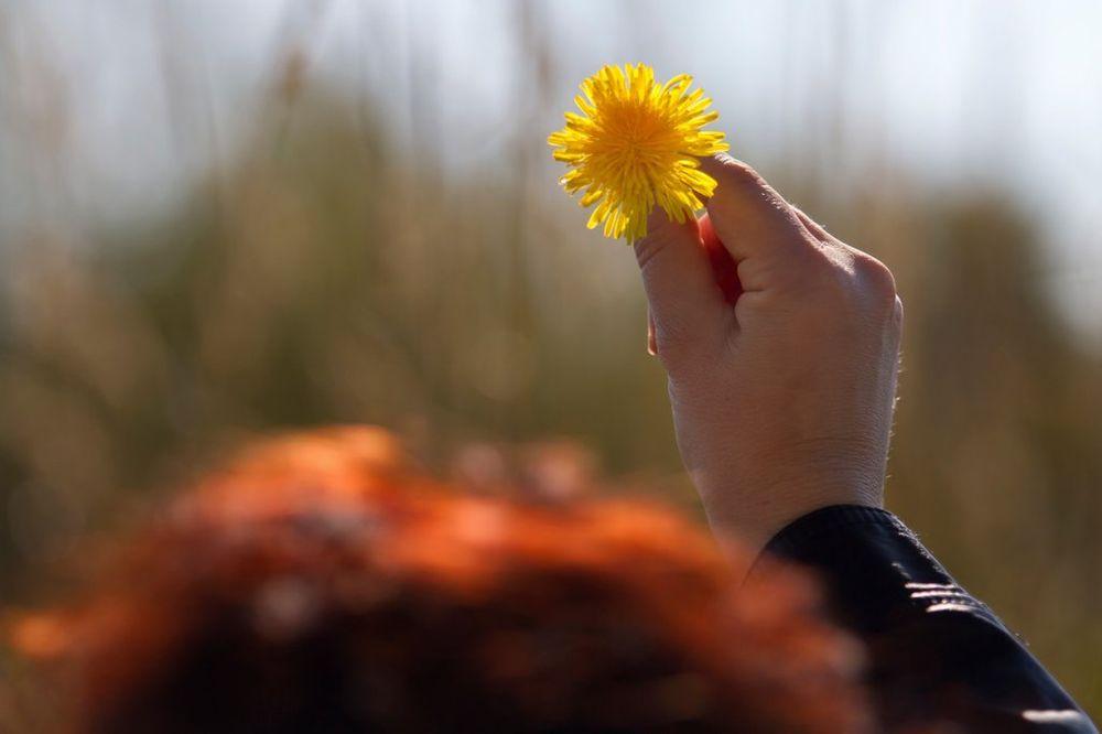 Резултат слика за cveti