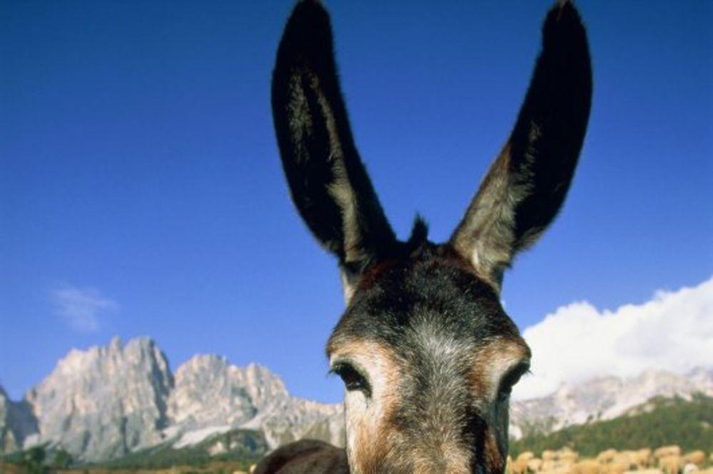 OVO MOŽE SAMO U BIJELJINI: Sudarili se biciklista i magarac!