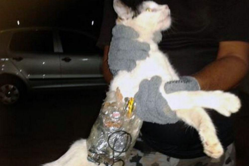 KAD SE POLICIJA ZANESE: Najšokantniji slučajevi hapšenja životinja!