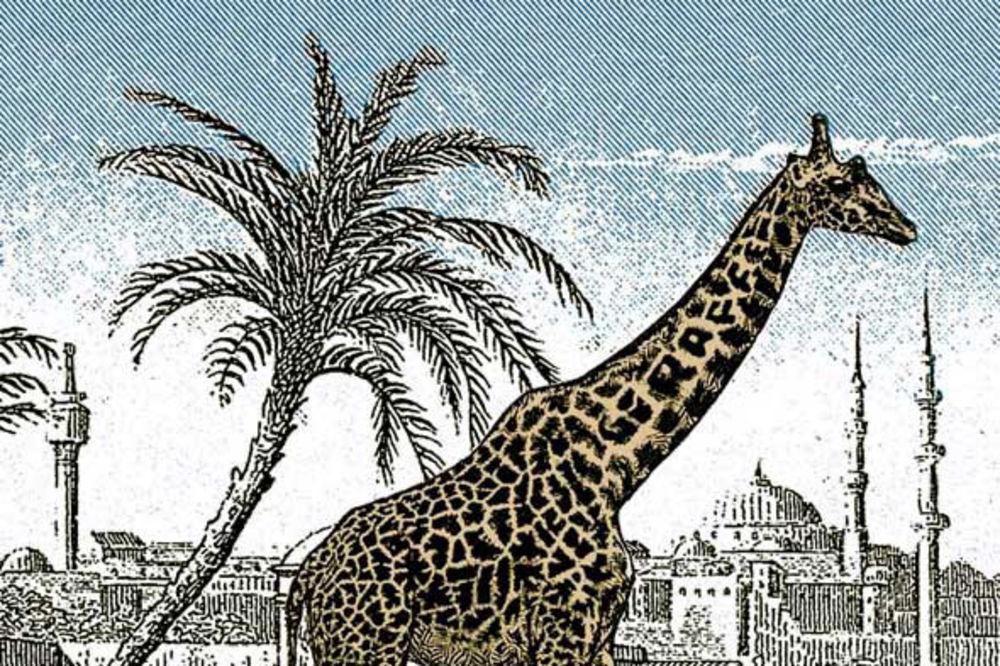 (FOTO) NEKAD NE POMAŽE NI OKO ORLOVO: Na slici se krije još jedna žirafa, bode oči a ne vidite je!