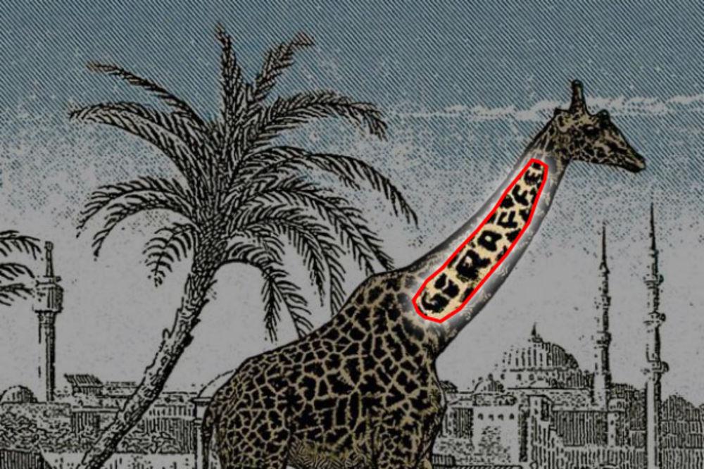 Ako niste našli žirafu, evo gde se sakrila