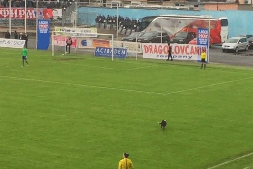 (VIDEO) NESTVARNO: Pogledajte kako je pit bul prekinuo utakmicu Novi Pazar - Vojvodina