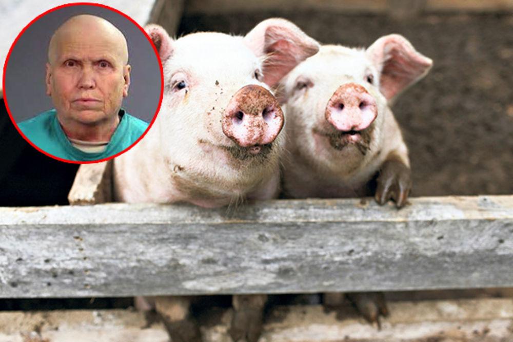 HLADNOKRVNI UBICA: Ubila svoje radnike i njima nahranila svinje!