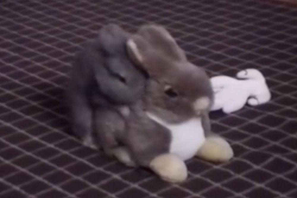 (VIDEO) ZEKA BRZ KAO MUNJA: Pogledajte kako je zaskočio plišanu igračku