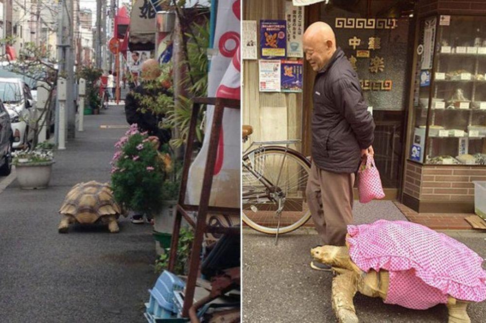 NEOBIČNI DRUGARI: Japanac i njegova džinovska kornjača šetaju svaki dan ulicama Tokija