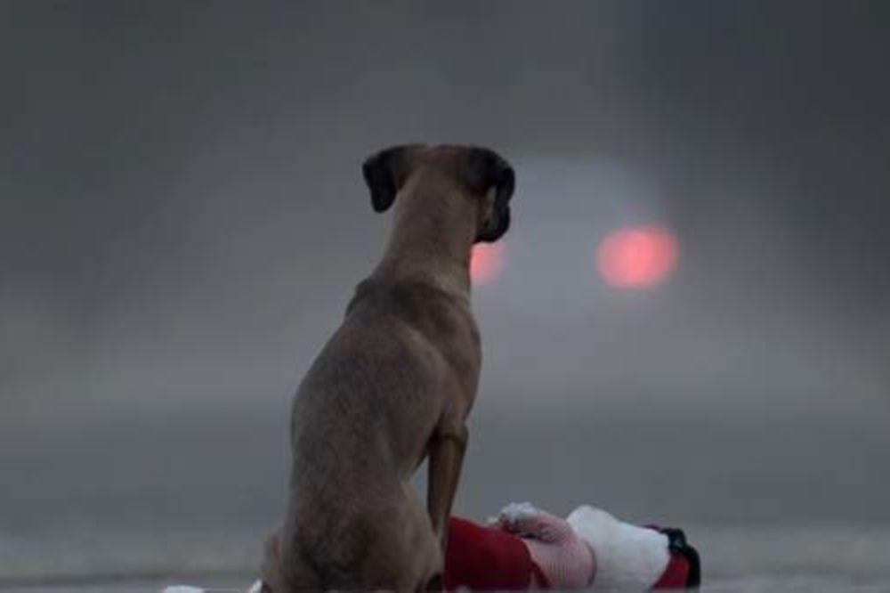 (VIDEO) POGLEDAJTE ODMAH: Pas nije igračka je video uz koji je zaplakalo milion ljudi