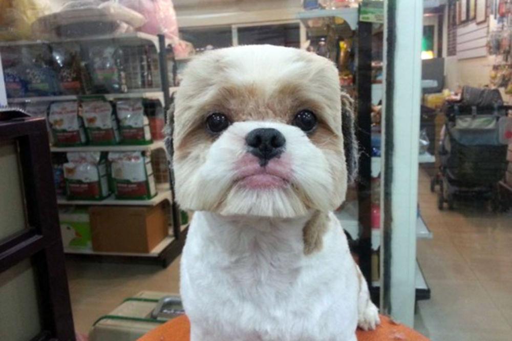 (FOTO) MOJ JE KOCKASTIJI OD TVOG: Da li biste uradili ovo svom psu?