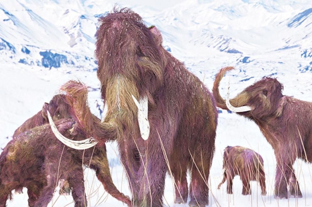 VASKRSENJE MAMUTA: Naučnici obnavljaju izumrlu vrstu!