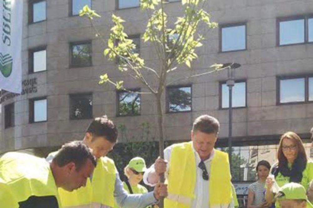 BANKARI FARBALI KLUPE: Sberbank Srbija uredila park u Bulevaru kralja Aleksandra