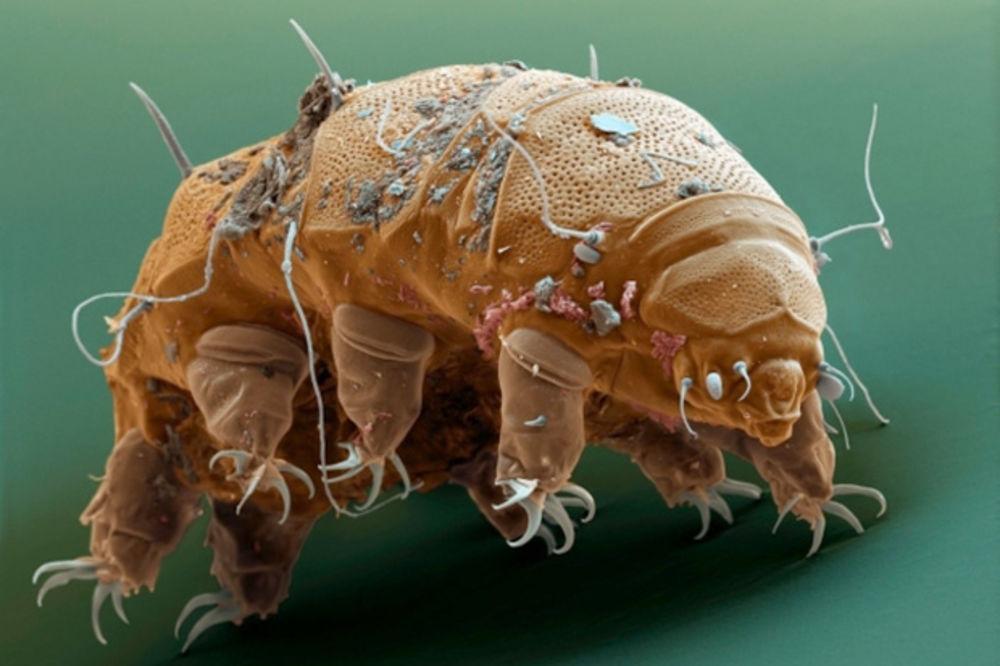 Ova bića su najjača stvorenja na planeti!