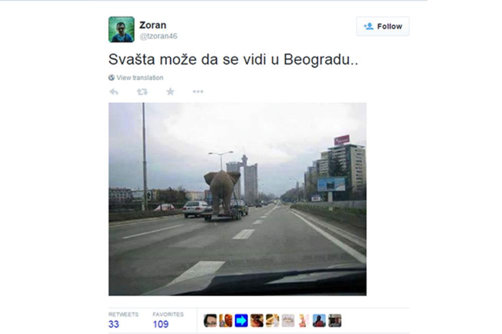 I TO SE DEŠAVA: Ovako slon razgleda Beograd