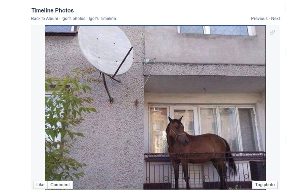 Šta to  Beograd ima i čega se Beograđani  plaše? - Page 6 Konj-na-terasi-u-zemunu-foto-fejsbukigor-malesevic-1433508488-673813