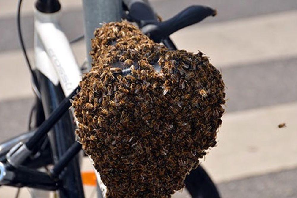 (FOTO) U BEČU KO U KOŠNICI, ALI STVARNO: Najezda pčela na grad, roje se i po bicilkima!
