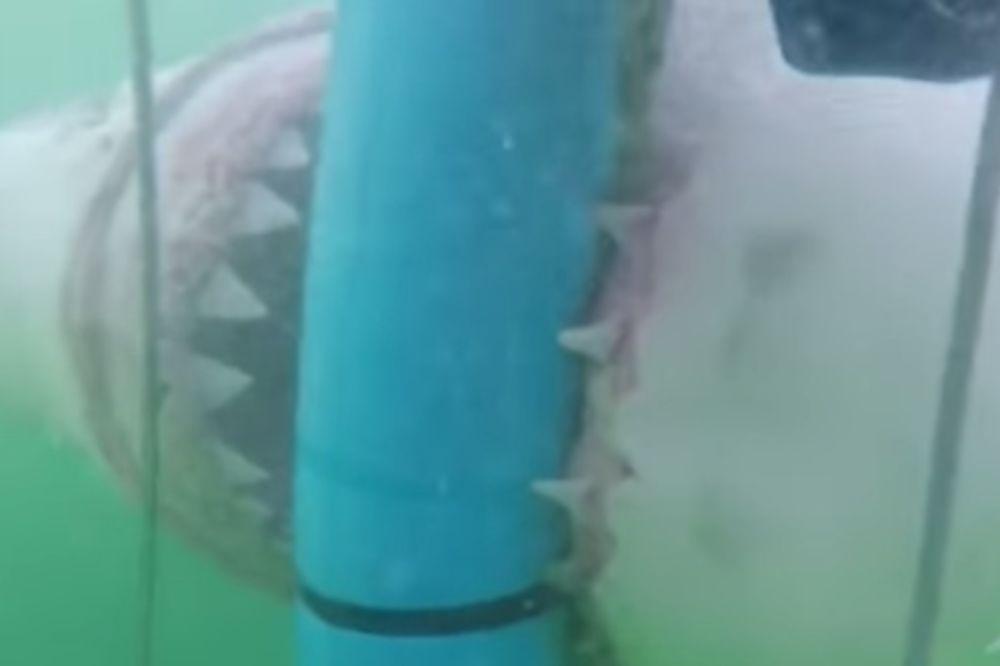ZASTRAŠUJUĆI VIDEO: Ajkula pokušala da pregrize kavez kako bi došla do ljudi!