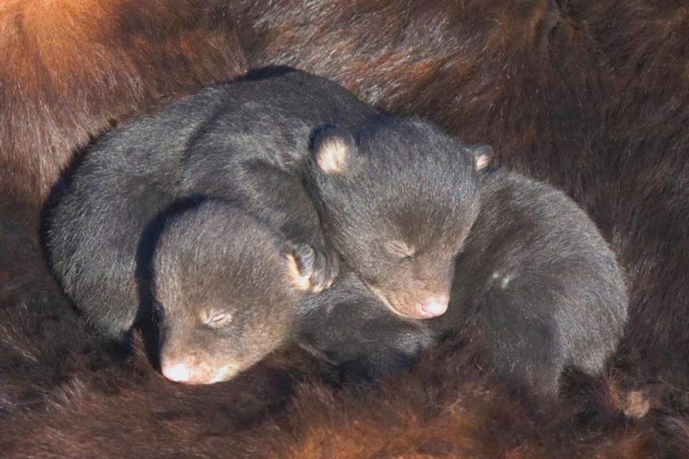 KAKVA KOBNA GREŠKA: Kupio je dva slatka šteneta, ali kada su porasli...