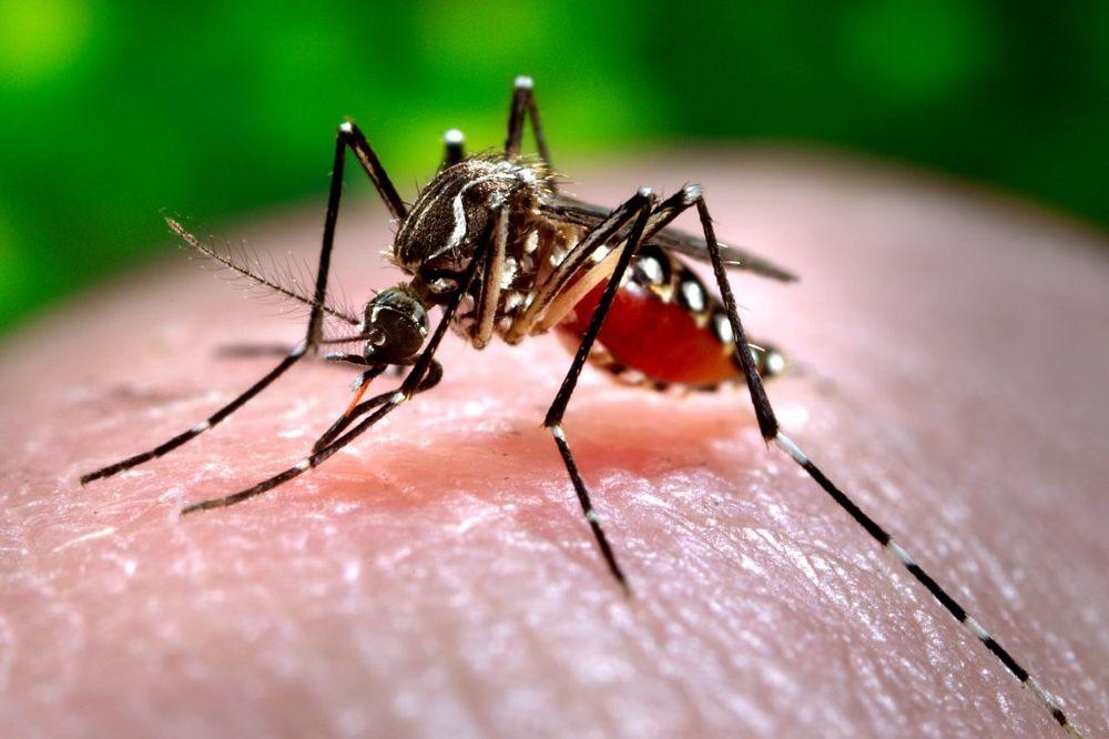 BATUT UPOZORAVA: Budite oprezni, komarci zaraženi virusom zapadnog Nila pronađeni u Srbiji
