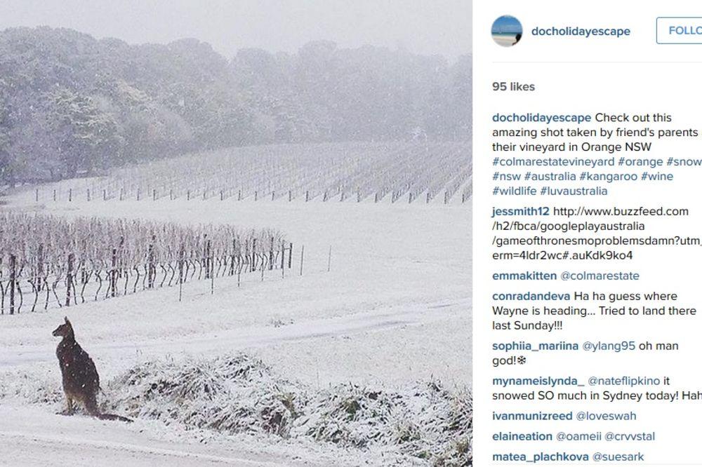 (FOTO) LUDO VREME: Dok se mi kuvamo, u Australiji prave Sneška Belića